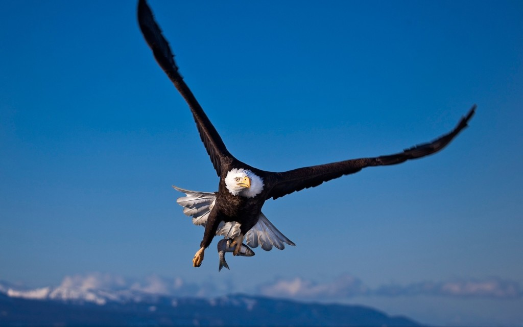 eagle-flying-hd-wallpapers.jpg
